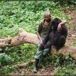 Traurig! Wir haben den Kampf verloren! Öl gegen Gorillas – Oil versus gorillas