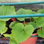 In der Corona-Not muss man kreativ werden! Anleitung: Gemüse und Kräuter aus eigener Ernte - auch auf dem Balkon möglich!