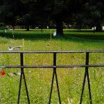 Städte und Gemeinden gegen Glyphosat - Roundup ja - aber Essig verstößt gegen Pflanzenschutzgesetz!