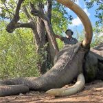 Grausam! Welcher Jäger erschoss diesen Elefanten in Simbabwe? – ANOTHER TUSKER HUNTED IN A CONSERVANCY ADJACENT TO THE GONAREZHOU NATIONAL PARK- Zimbabwe