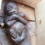 Gito wurde als Haustier gekauft. Als man ihn fand, war seine Haut grau und er hatte sein gesamtes Haar verloren