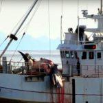 Die Giganten der Meere sind in Gefahr - trotzdem erhöht Norwegen jährliche Walfangquote - Futter für Pelzindustrie des Landes