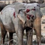 Elephants don't belong in a circus! Wie traurig! Spanischer Zirkuswagen kippt um, tötet einen Elefanten, verletzt vier andere -1 Elephant Died and 4 Others Were Hurt After a Circus Truck Crash