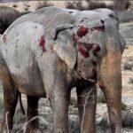 WährendNew Jersey Wildtiere in Zirkusse verbietet, stemmt sich LandwirtschaftsministerinKlöckner gegen ein Verbot von Wildtieren im Zirkus