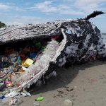 Was Plastik anrichtet – toter Wal vor Spanischer Küste hatte fast 30 Kilogramm Müll in seinem Magen und Darm - Plastic pollution likely killed whale found with nearly 30kg of rubbish in its stomach