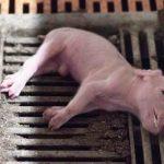 Haben wir in Deutschland bereits chinesische Verhältnisse? Deutsche Politik will Tierschützer kriminalisieren!