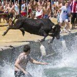 Grausame Aufnahmen zeigen, wie Tiere als Touristenattraktion leiden!