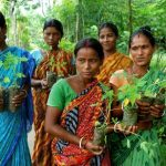 Es isteine der nachhaltigsten Traditionen auf der Welt – Ein indisches Dorf pflanzt 111 Bäume für jedes neugeborene Mädchen