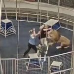 Video: Wütender Löwe attackiert plötzlich seinen Dompteur im Zirkus! - Lions Attack On Trainer In The Circus