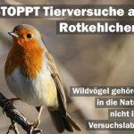 Sehr bedenklich! Tierversuche an Rotkehlchen! Das muss aufhören!