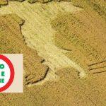 Fünfzigtausend Euro Strafe für Monsanto-Befürworter! Landwirt sät erneut GVO-Mais!