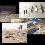 Dramatisches Massensterben im Meer weltweit! Wale, Robben, Pinguine, Schildkröten, Delfine, Fische … Dramatic mass extinction in the oceans worldwide! Whales, seals, penguins, turtles, dolphins, fish …
