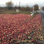 Wahnsinn wegen Überproduktion in Europa – Felder mit verdorbenen Äpfeln und Winzer müssen Trauben hängenlassen