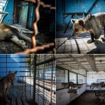 "Die armen Tiere - der ""Höllenzoo"" von  Albanien - Inside the horrifying Albanian 'zoo from hell'!"