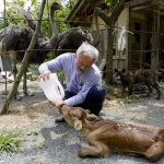 "Treffen Sie den ""radioaktivsten"" Mann der Erde ""Schützer der Tiere von Fukushima"" - Meet the Earth's Most Radioactive Man Who Takes Care of Fukushima's Animals"