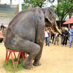 Horror-Zustände! Erschütternde Bilder zeigen unterernährte Tiere im umstrittenen thailändischen Zoo – Harrowing images show painfully thin animals at controversial Thai zoo