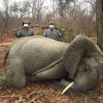 Diese skrupellosen Trophyhunter schrecken vor nichts zurück und erschießen sogar einen Babyelephanten - Baby Elephant Killed!