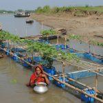 Die schwimmenden Gärten von Bangladesch - Floating Farms of Bangladesh