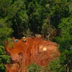 Wie kann man die Bulldozer stoppen? Palmöl-Industrie sucht neue Flächen! – Rainforest in Papua – Can maps stop a bulldozer?