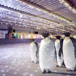 Traurige Welt - Tiere werden als Touristenattraktion missbraucht - In London mit echten Pinguinen Schlittschuh laufen!