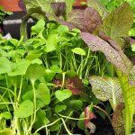 Anleitung: Gemüse und Kräuter aus eigener Ernte