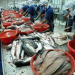 Igitt - Der beliebteste Fisch der Welt - mit reichlichPestiziden, Fäkalien und gefährlichem Quecksilber - DO NOT EAT THIS FISH, IT IS VERY DANGEROUS FOR YOUR HEALTH!