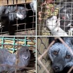 Erfolg in Tschechien - vollständiges Verbot von Pelzfarmen tritt in Kraft - Full ban on animal fur farms in the Czech Republic is now in effect