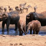 Ein Bauer ausAfrika hilft den Wildtieren, die von der schweren Dürre betroffen sind - African Man Delivers Thousands Of Litres Of Water To Drought-Stricken Animals