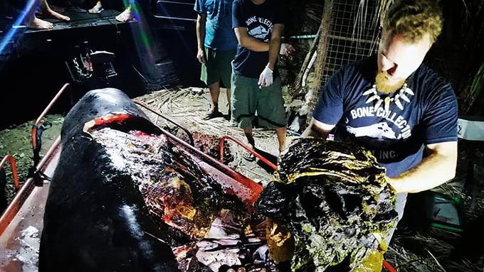 schon wieder wal starb mit 40 kg plastik im magen dead whale in philippines had 40 kg of. Black Bedroom Furniture Sets. Home Design Ideas
