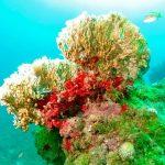 Unglaublich, das muss verhindert werden! Ölbohrungen im Korallenriff in Brasilien! - Save ABROLHOS Brazil! Ministry orders IBAMA to release oil near coral reef!