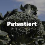 """Kennen Sie Monsantos Superbrokkoli? Der neue Trick der Konzerne, Genmanipuliertes als """"BIO"""" auf den Bio-Markt zu bringen!"""