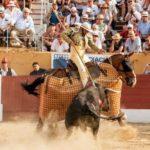 Brutaler Stierkampf - Nicht nur die Stiere leiden, sondern auch die Pferde, die für diese Veranstaltungen missbraucht werden! - Horses – the forgotten victims of bullfighting