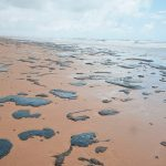 """Deepwater Horizon"" in Brasilien? Rätselhafte Ölpest tötet Tiere entlang der brasilianischen Küste - Deepwater horizon all over again? Mystery oil spill kills wildlife along Brazilian coast"