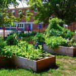"""Tolle Ideen - """"Essbare"""" Landschaften - Eine andere Welt ist pflanzbar! - 15 Organizations Creating Edible Landscapes"""