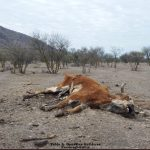 Schreckliche Dürre in Chile - Hunderttausend Nutztiere wegen Wassermangel gestorben - Chile's drought killing thousands of farm animals