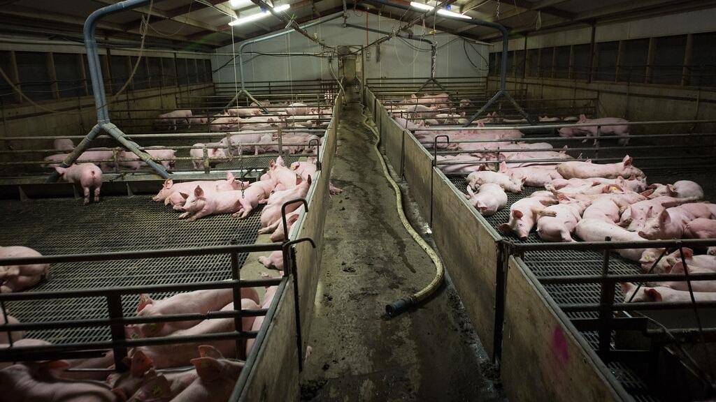 """""""Dominion""""- Ein aufrüttelnder Film – Eine Dokumentation, die jeder einmal gesehen haben sollte. – """"Dominion"""" Film Reveals Truth of Animal Agriculture"""