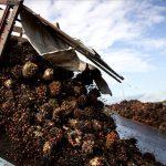 ADM, Cargill, Nestlé und Deutsche Unternehmen beteiligt! Tausende Hektar Naturwald für Palmölanbau in Guatemala vernichtet - Deep in Guatemala's jungle, drugs and murder are new neighbors to palm oil
