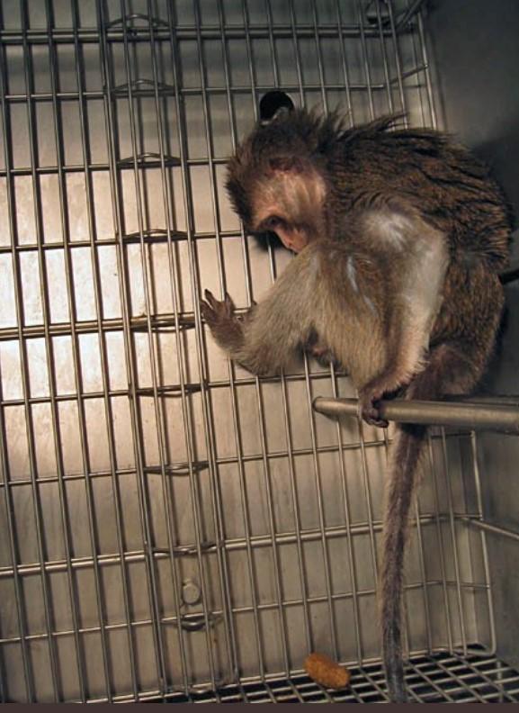 Ist Deutschland das Tierversuchslabor der Welt? Stoppt den Ausbau des Tierversuchslabors in Münster und Augsburgs erstes Tierversuchslabor