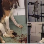 Das Leiden der Tiere für Tierversuche im Todeslabor vor Hamburg- Monkeys strapped into metal harnesses while cats and dogs left bleeding and dying at 'German laboratory'