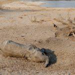Dramatisches Massensterben von Tieren weltweit! Wir stehen vor Konsequenzen für die Menschheit, die noch zu unseren Lebzeiten spürbar werden!