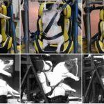 Lebende Schweine in China als Crash-Test-Dummies missbraucht! - Scientists In China Are Using Live Pigs As Crash Test Dummies