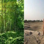 Dieser Inder hat alleine einen großen Wald gepflanzt, um Menschen und Tiere zu retten- Meet Jadav Payeng, India's Forest Man, who created 550 hectares of forest single-handedly