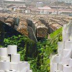 """Der Krieg ums """"weiße Gold"""" - Regenwälder sterben für Klopapier - Toilet paper is wiping out our forests"""