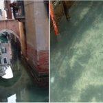 Positive Nebeneffekte des Coronavirus: Venedig- klares Wasser und die Rückkehr der Tierwelt. -Venice canals clear up as pandemic shuts down tourism