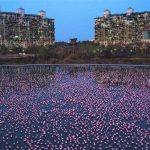 'Ein Meer aus Pink' - Positive Nebeneffekte des Lockdowns - Rückkehr der Tierwelt! 'A sea of pink' - Amid coronavirus pandemic, animals reclaiming empty cities