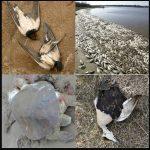 Dramatisches Massensterben von Tieren weltweit geht weiter! - Dramatic mass extinction of animals worldwide!