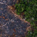 Die subventionierte Fleisch- und Milchindustrie zerstört den Regenwald!