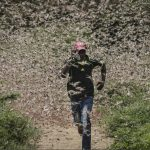 """Hungerpandemie"" Nach COVID-19 ist Mega-Heuschreckenplage die nächste Herausforderung - Hunger Pandemic - After COVID-19 next challenge could be mega-sized locust attack!"