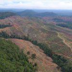 Let's talk about PALMOIL! Das schmierige Geschäft mit Palmöl