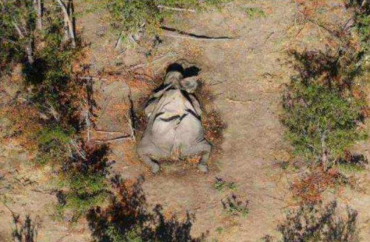 Botswana Elefanten Tot